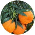 Výtažek z hořkého pomeranče