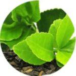 Výtažek ze zeleného čaje
