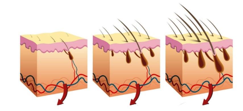 Jak můžete zastavit vypadávání vlasů a urychlit čtyřikrát regeneraci, aniž byste riskovali majlant