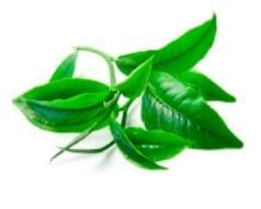 Extract ze zeleneho caje