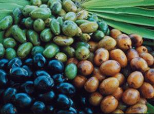 Extrakt ze dřeva palmetto