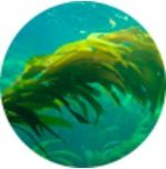 Minerální vápník z mořských řas lithothamnia