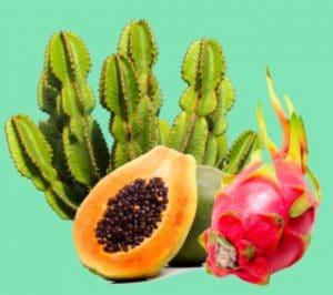 Opuncié, pitahaya a papaya