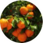 Extrakt z červeného pomeranče