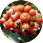 Extrakt ze semene guarany