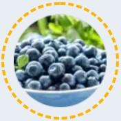 Plody borůvek