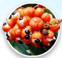 Extrakt z semen Guarana