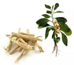 Extrakt z korene vitarie snodarne