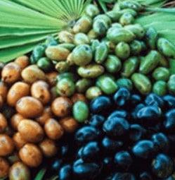 Extrakt z palmového ovoce Sabal